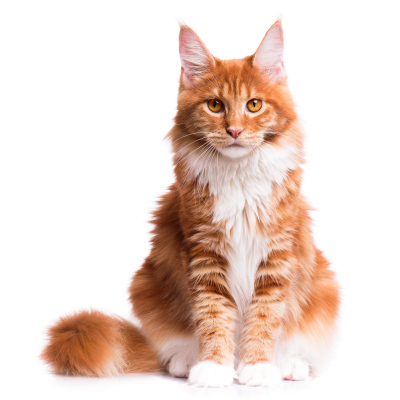 Medway Grooming For Cats - About Us