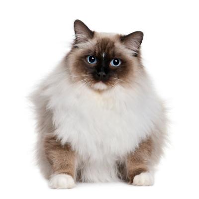 Medway Grooming For Cats - Cat Grooming Services